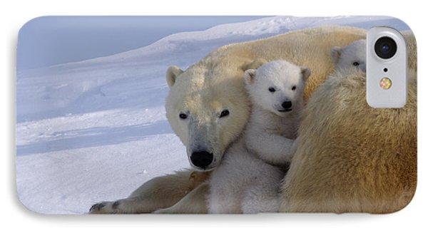 Polar Bear And Cubs IPhone Case by Jean-Louis Klein & Marie-Luce Hubert