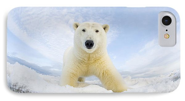 Polar Bear  Ursus Maritimus , Curious IPhone Case by Steven Kazlowski