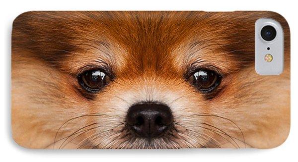 Pomeranian. Phone Case by Parawat Isarangura Na Ayudhaya
