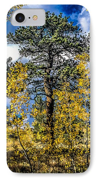 Ponderosa  Tree In The Aspens Of Fall Colorado IPhone Case by John Brink