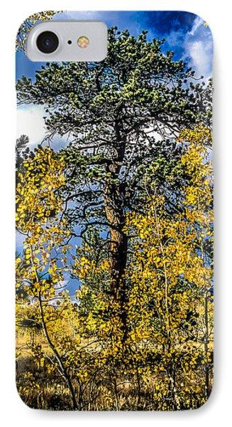 Ponderosa  Tree In The Aspens Of Fall Colorado IPhone Case