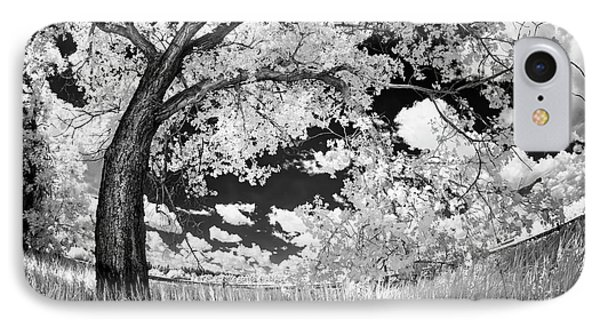 IPhone Case featuring the photograph Poplar On The Edge Of A Field by Dan Jurak