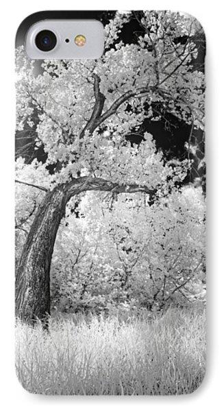 Poplars Under The Sun IPhone Case by Dan Jurak