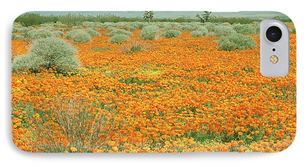 IPhone Case featuring the photograph Poppies For Ever - Poppy Fields Mohave Desert California by Ram Vasudev