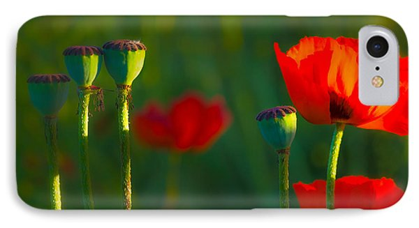 Poppies In Evening Light IPhone Case by Joan Herwig