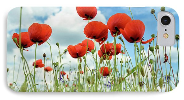 Poppies In Field IPhone Case