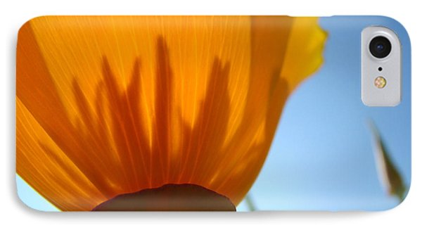 Poppies Sunlit Poppy Flower 1 Wildflower Art Prints IPhone Case by Baslee Troutman