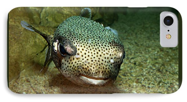 Porcupine Fish IPhone Case
