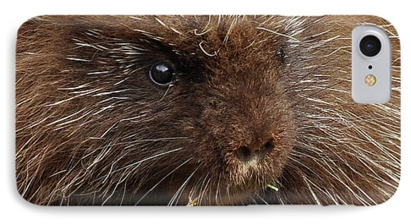 IPhone Case featuring the photograph Porcupine by Glenn Gordon