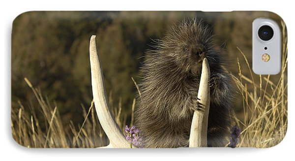 Porcupine IPhone Case by Wildlife Fine Art