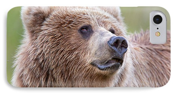 Portrait Of A Grizzly IPhone Case by Richard Garvey-Williams