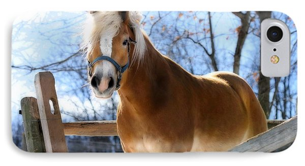 IPhone Case featuring the photograph Portrait Of A Haflinger - Niko In Winter by Angela Rath