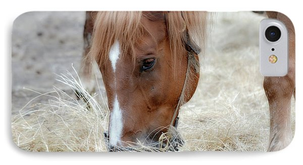 Portrait Of A Horse IPhone Case by Brenda Bostic