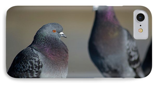 IPhone Case featuring the photograph Portrait Of A Pigeon by Lora Lee Chapman