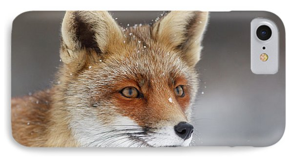Portrait Of A Red Fox In The Snow IPhone Case by Roeselien Raimond
