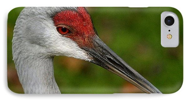 Portrait Of A Sandhill Crane IPhone Case