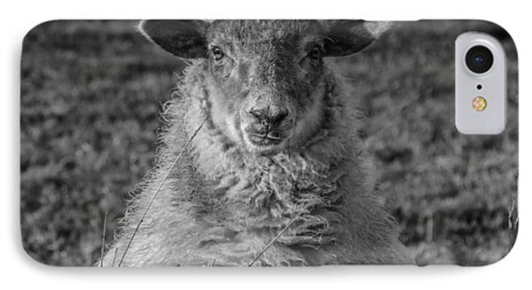 Portrait Of A Sheep IPhone Case