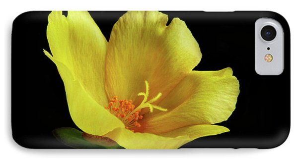 IPhone Case featuring the photograph Portrait Of A Yellow Purslane Flower by David and Carol Kelly
