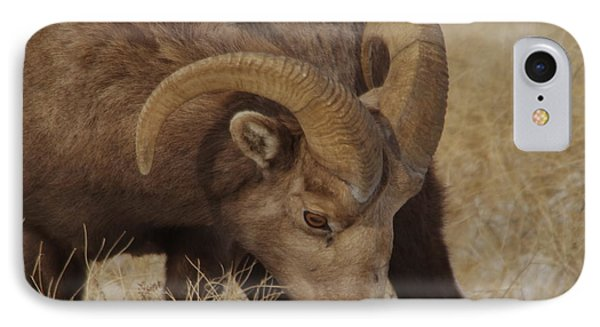 Portrait Of A Young Ram IPhone Case