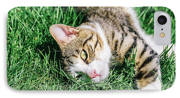 Portrait Of Cute Domestic Tabby Cat Playing In Grass IPhone Case by Radu Bercan