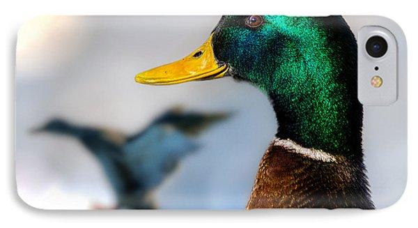 Portrait Of Duck 2 IPhone Case by Bob Orsillo