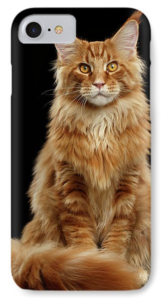 Portrait Of Ginger Maine Coon Cat Isolated On Black Background IPhone Case by Sergey Taran