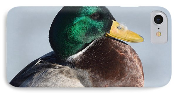 Portrait Of Mallard Duck Drake With Feather Phone Case by Merrimon Crawford