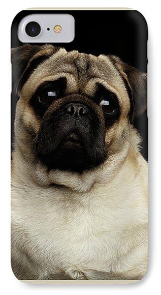 Portrait Of Pug IPhone Case by Sergey Taran