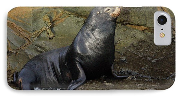 Posing Sea Lion Phone Case by Randall Ingalls