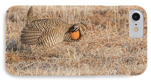IPhone Case featuring the photograph Prairie Chicken 10-2015 by Thomas Young