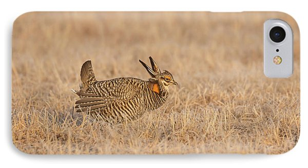 IPhone Case featuring the photograph Prairie Chicken 7-2015 by Thomas Young