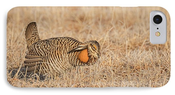 IPhone Case featuring the photograph Prairie Chicken 9-2015 by Thomas Young