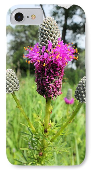 IPhone Case featuring the photograph Prairie Clover by Scott Kingery