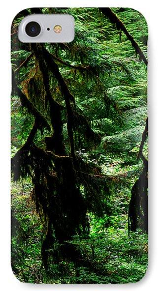 Prairie Creek Redwoods State Park 12 IPhone Case