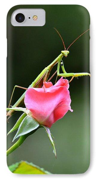 Praying Mantis 2 IPhone Case by Noah Cole