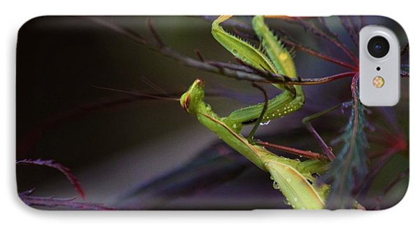 Praying Mantis IPhone Case by Erica Hanel