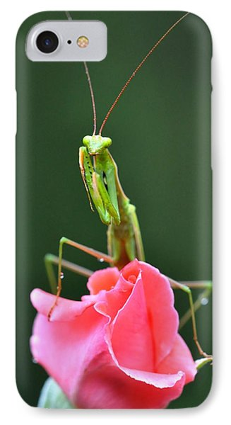 Praying Mantis IPhone Case by Noah Cole