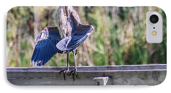 Preening Gret Blue Heron IPhone Case by Edward Peterson