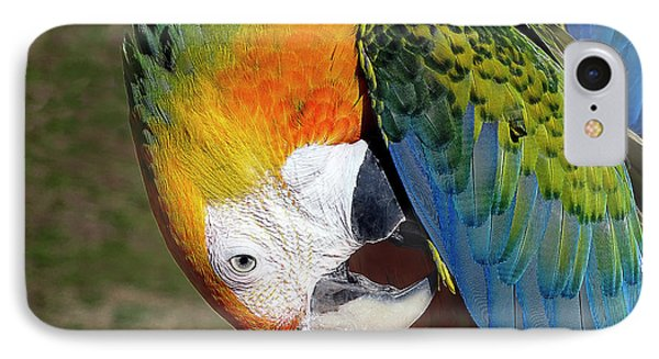Preening Macaw IPhone Case by Melissa Messick