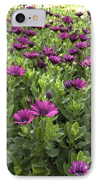 Prescott Park - Portsmouth New Hampshire Osteospermum Flowers Phone Case by Erin Paul Donovan