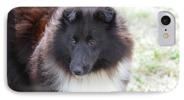 Pretty Black And White Sheltie Dog IPhone Case