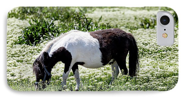 Pretty Painted Pony IPhone Case by James BO Insogna