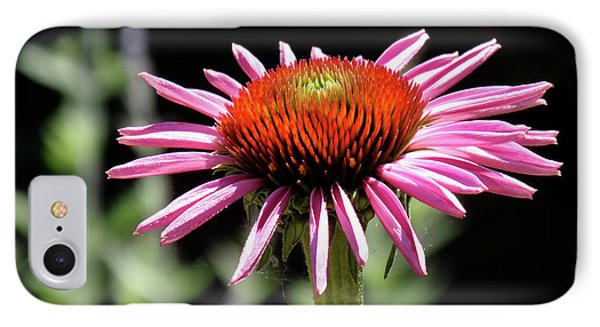Pretty Pink Coneflower IPhone Case by Rona Black