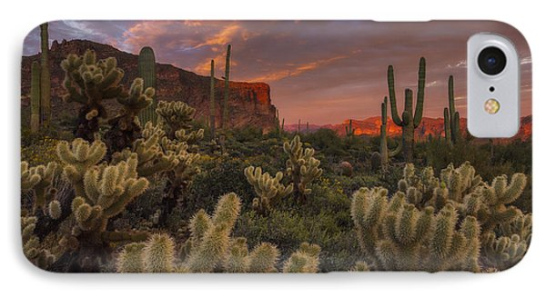 Prickly Pink Peralta Phone Case by Peter Coskun