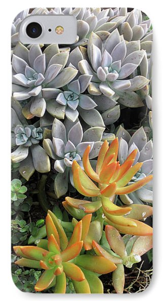 IPhone Case featuring the photograph Prickly Two by Ken Frischkorn