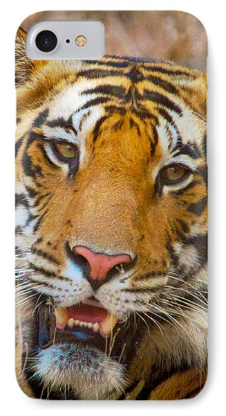 Prime Tiger IPhone Case by David Beebe