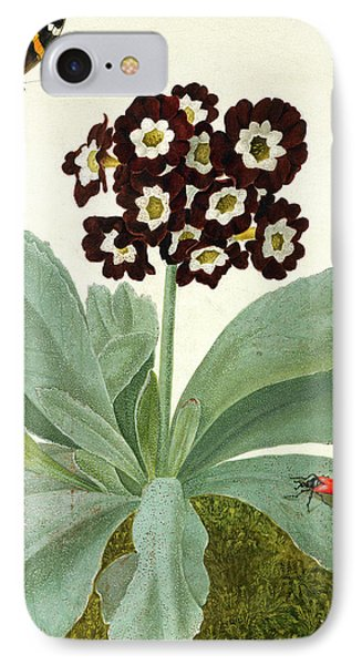 Primula Auricula With Butterfly And Beetle IPhone Case