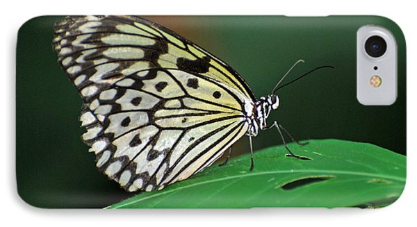 IPhone Case featuring the photograph Prince Of The Flower  by Teresa Blanton