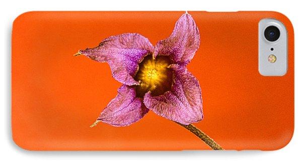 Princess Diana Clematis Blossom IPhone Case by Douglas Barnett