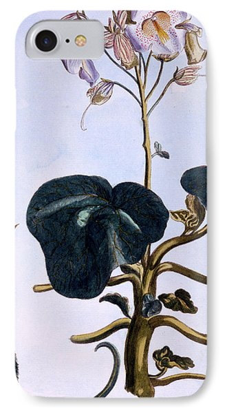 Proboscis Flower IPhone Case by Pierre-Joseph Buchoz